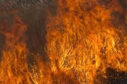 травяные и тростниковые пожары наносят огромный вред природе и человеку